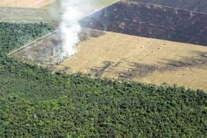 El Amazona y su deforestación.