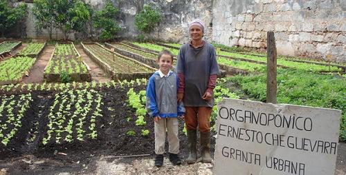 granja-urbana-en-Cuba